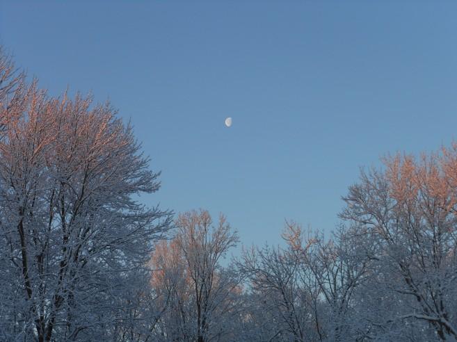 sleeping winter trees